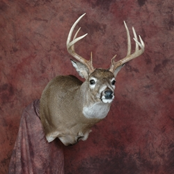 Cad Full Sneak Wall Mount Deer Manikin