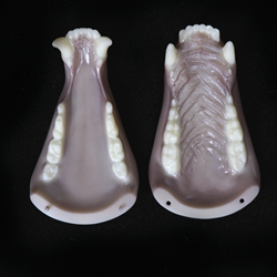 8112 - Black Bear Medium Jawset with Tongue