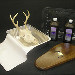European Skull Mount Kit